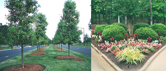 Comercial Landscape Construction Trees Flower Charlotte North Carolina